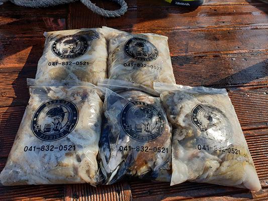 [푸른바다3호]10월12일 쭈꾸미 갑오징어 조황